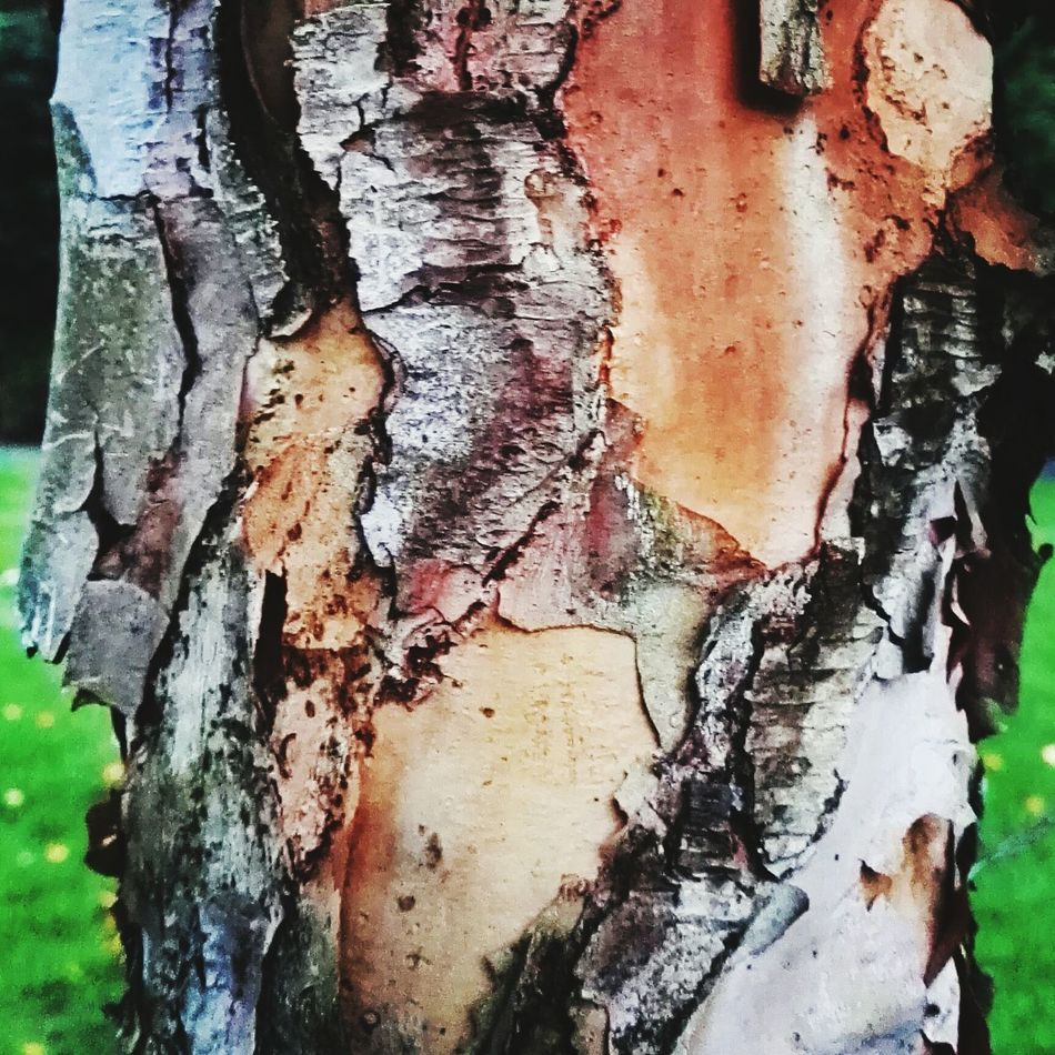 Tree Bark Barking Mad Trees Outdoors Dog Walking Country Life