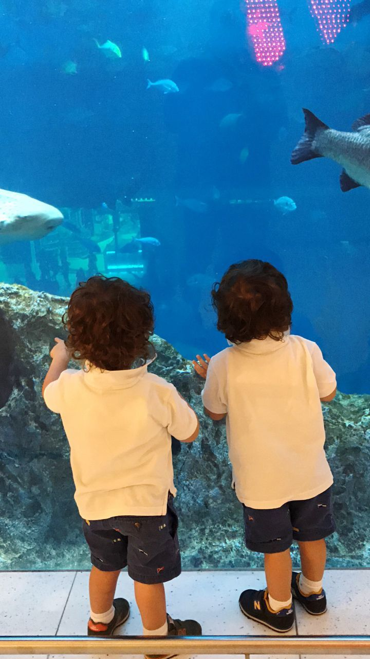 real people, rear view, childhood, leisure activity, lifestyles, aquarium, girls, boys, standing, animals in captivity, two people, fish, elementary age, full length, casual clothing, animal themes, togetherness, sibling, indoors, sea life, water, day