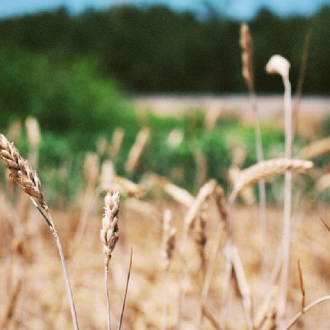 Farmlife Farm Hughsonca Denairca camerabag2 samsungnx300 instahub webstagram adventure hughson denair bfe california abandoned old