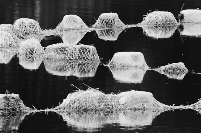 Water Lake Black And White Floating On Water Floats Jewel Like Jewels Reflections Abstract Original Experiences The Innovator Showcase June The OO Mission Fine Art Photography Monochrome Photography