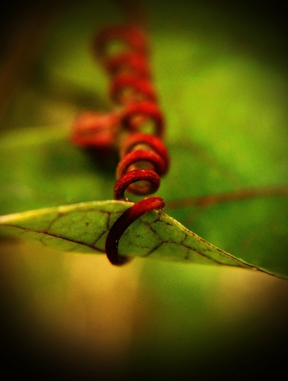close-up, no people, insect, nature, animal themes, selective focus, one animal, green color, animals in the wild, outdoors, day, red, beauty in nature