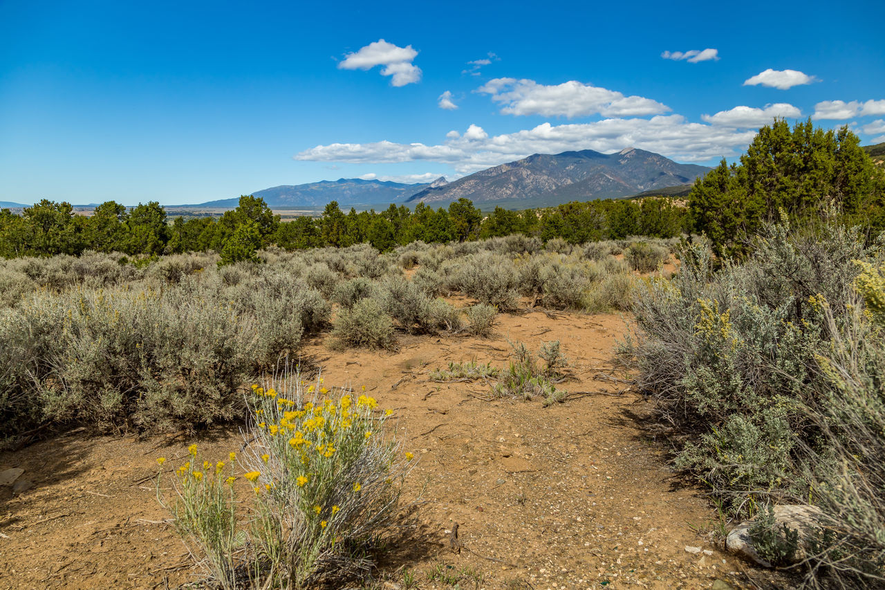 Blue Desert Grass Landscape Mountain Nature New Mexico No People Outdoors Sangre De Cristo Range Scenics Sky Taos New Mexico