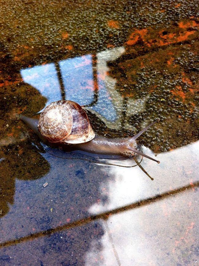 Captured Moment Eye4photography Get Close Ksilencio.com