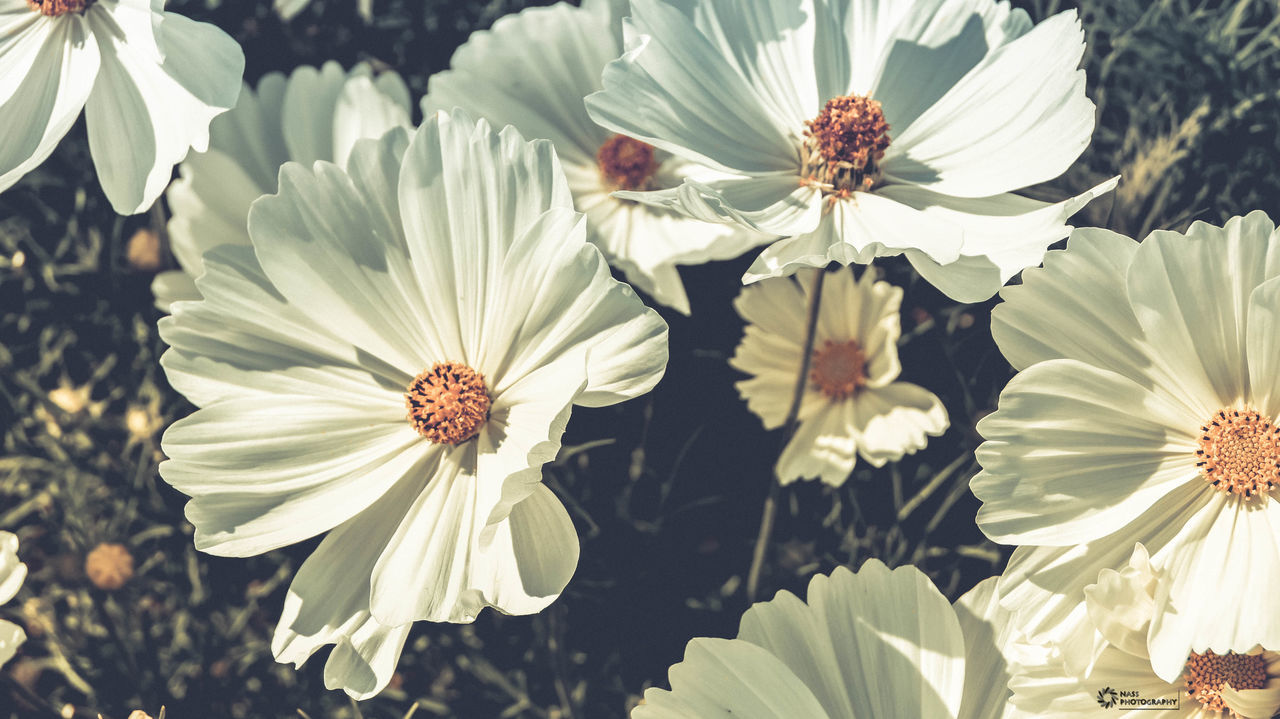 flower, petal, flower head, fragility, nature, growth, beauty in nature, freshness, pollen, no people, plant, outdoors, blooming, day, stamen, close-up