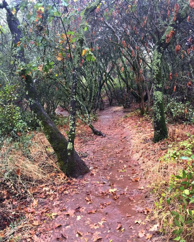 Tree The Way Forward Leaf Tranquility Footpath Tranquil Scene Change Autumn Growth Scenics Nature Beauty In Nature Non-urban Scene Check This Out Fallen Tree Love No People Rain Pathway Branch Outdoors Diminishing Perspective Day Walkway Narrow