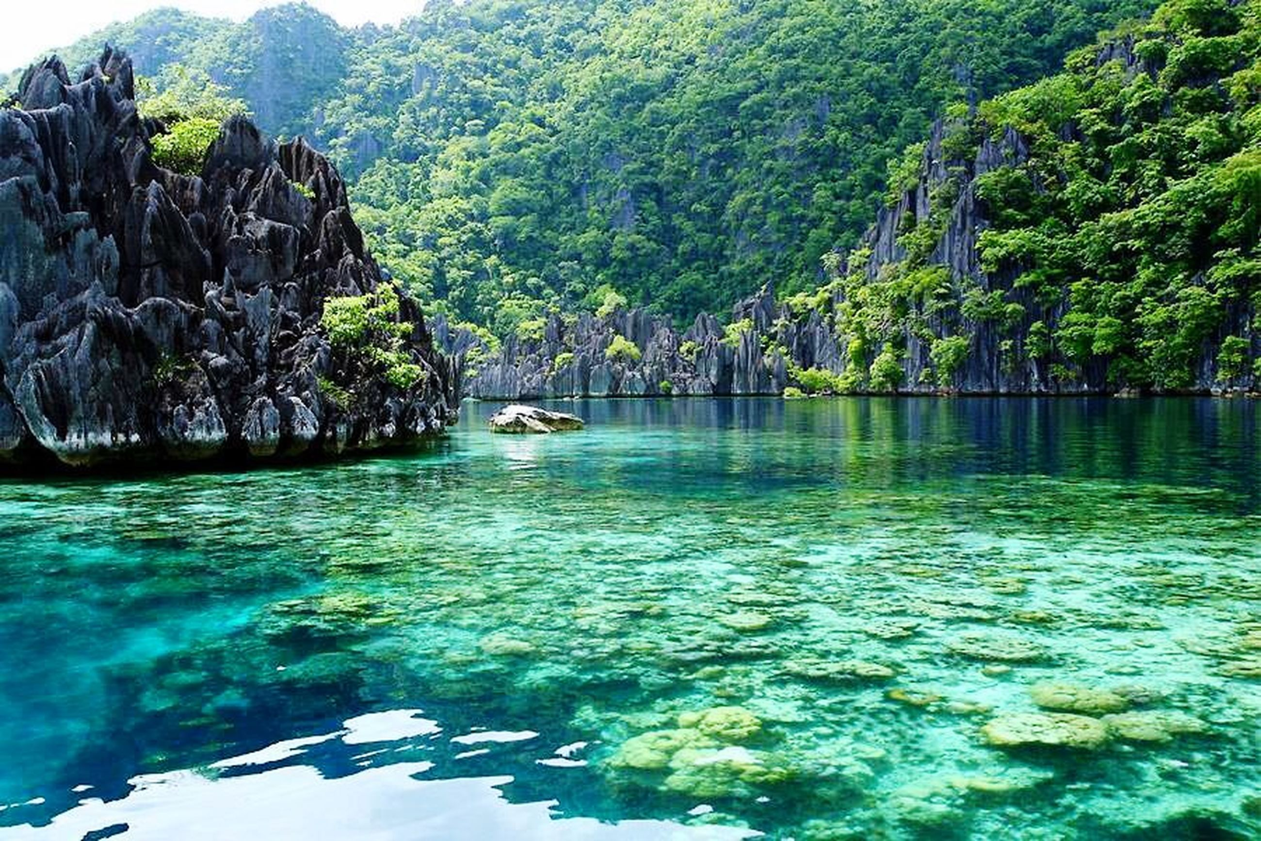 water, tree, tranquility, tranquil scene, beauty in nature, scenics, nature, waterfront, idyllic, sea, reflection, green color, blue, growth, rock - object, day, turquoise colored, mountain, lake, rippled