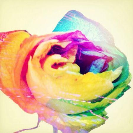 Rainbow RoséBeautifulRomantic