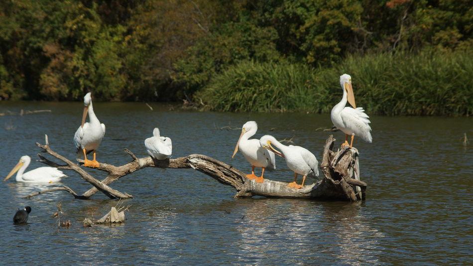 Beautiful stock photos of texas,  Animal Themes,  Animal Wildlife,  Animals In The Wild,  Bird