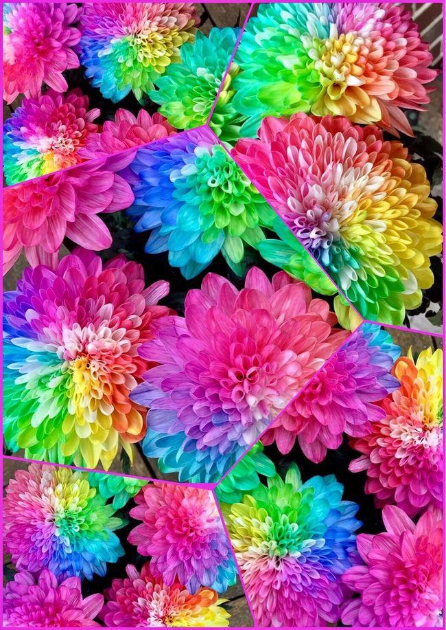 More flower art 💜💚💙💛❤️ Colourful Rainbow Flowers Likearainbow Flowerdye Pretty