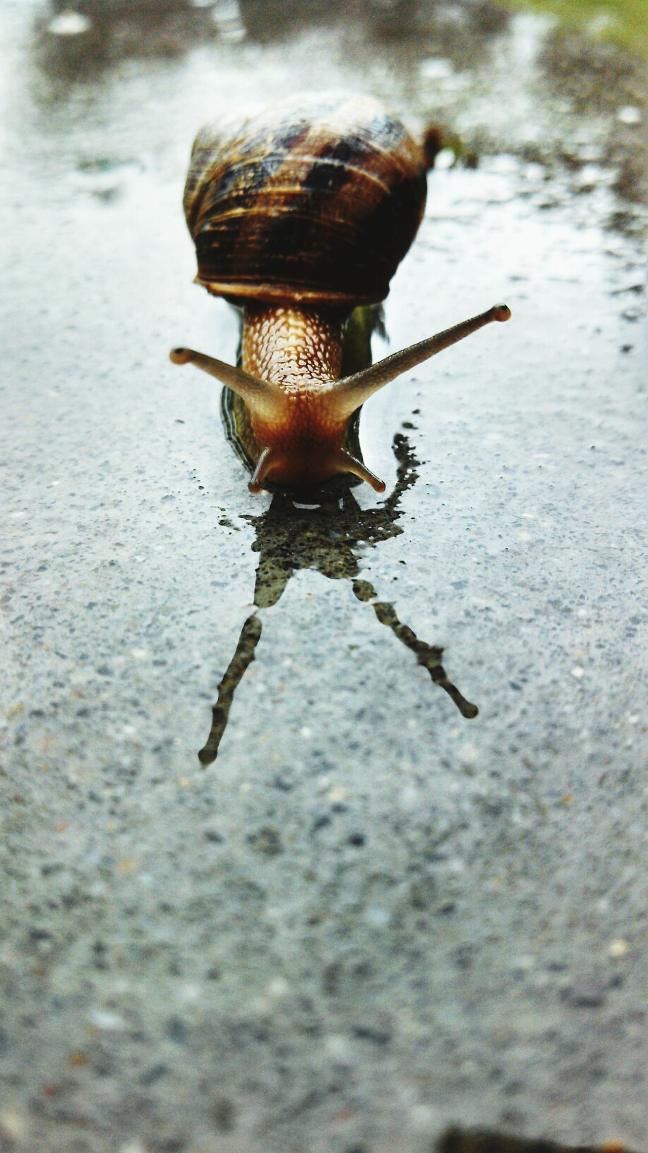 Snail Urban Nature Rainy Day I Will Save You