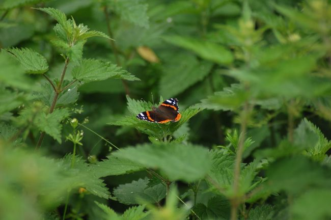 Butterfly Green Flora Fauna Beauty In Nature Showcase:June Freshness Plants Nature Photography Balance Growth Insect Photography Fragile Wide Wings