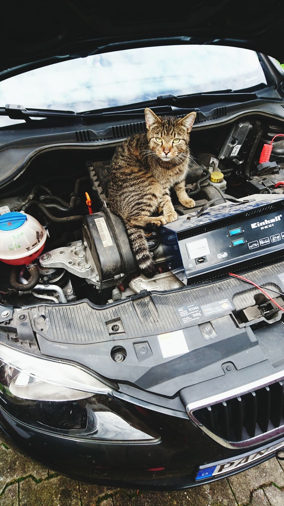Cats Cars Cool Guy Pets Love