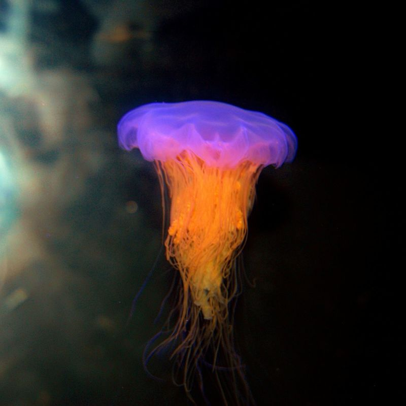 Beauty & Grace 02 Jellyfish Sea_collection Life In Colors Seaflowing