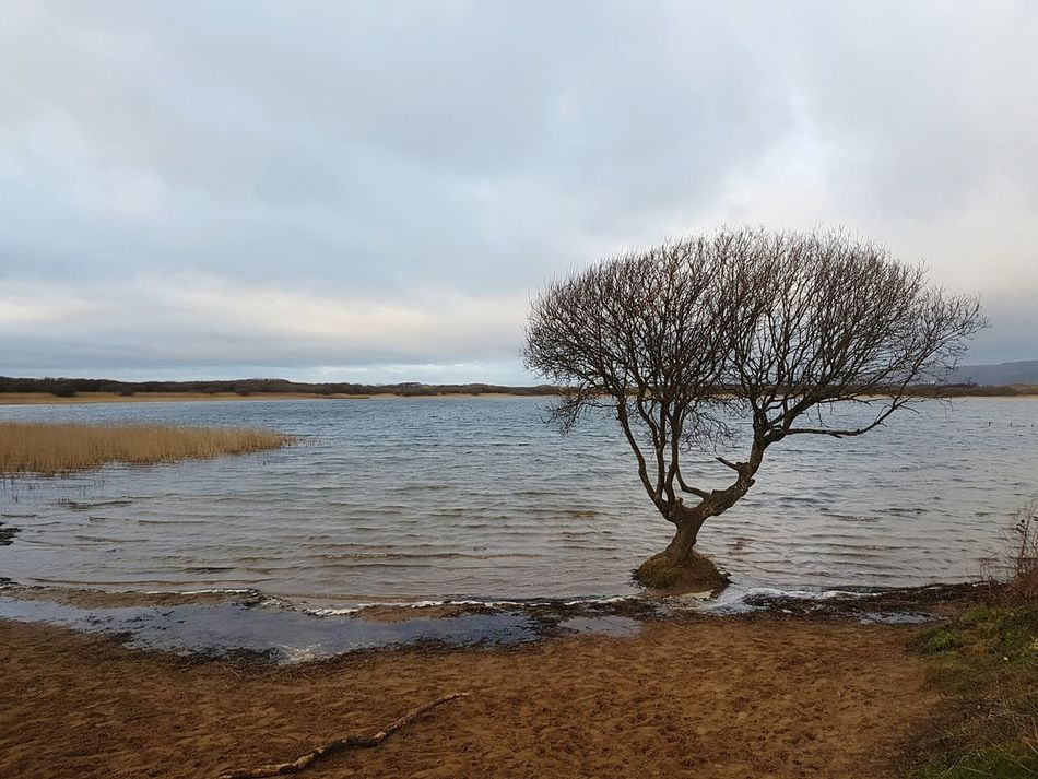 Perpetual submersion Nature Beach Outdoors Cloud - Sky No People Sky Sea Wave Water Day Wintertime Winter Kenfig Growth Nature Tree Beauty In Nature Tranquility Scenics Horizon Over Water Port Talbot Steelworks Pond Lake Nature Reserve