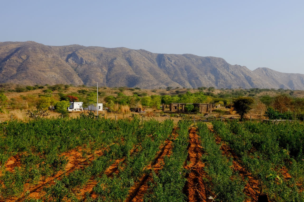A farm located in rural area. Agriculture Farm Field Growth Landscape Mountain Nature Rural Scene Scenics