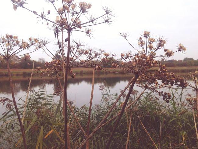 Bremen Werdersee FallFlowers Dry Flower
