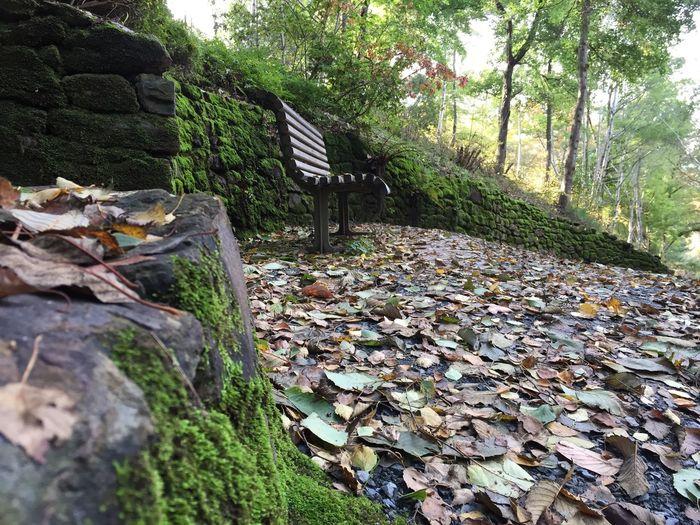 Mt Lofty Botanical Gardens Take A Break Autumn Colors Autumn Leaves
