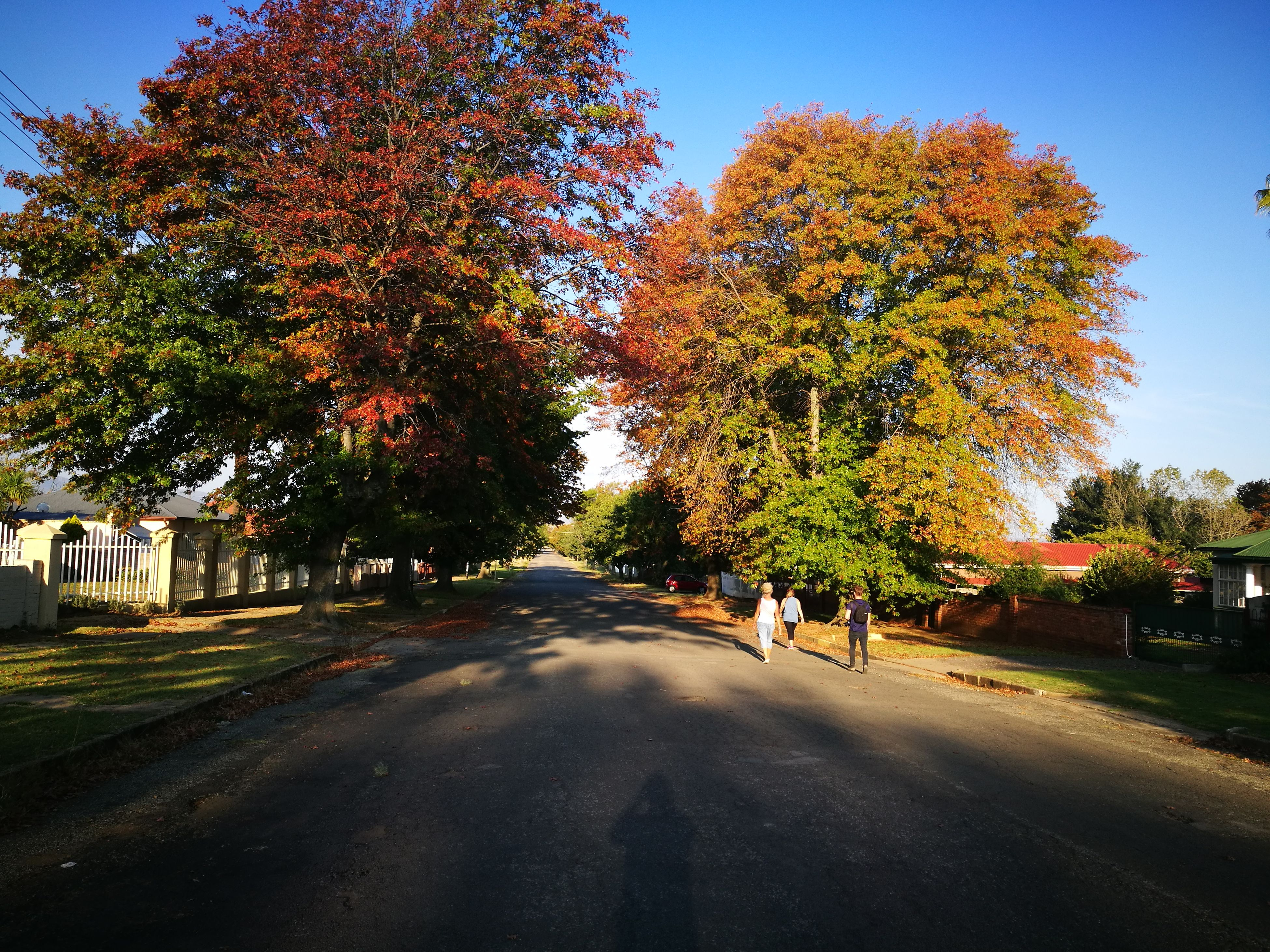 tree, road, transportation, no people, the way forward, growth, outdoors, sky, nature, day