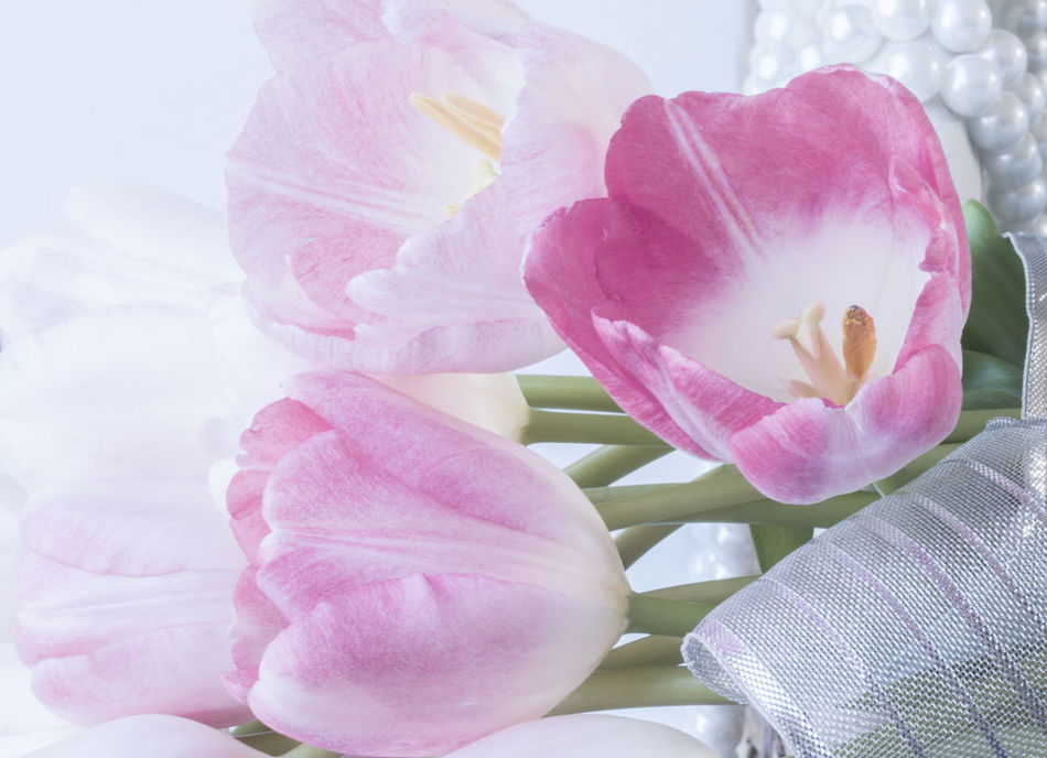 fresh pink tulips on wicker basket decorate pearl and ribbon. Accessory; Aroma; Art; Background; Basket; Beautiful; Blooming; Blossom; Bouquet; Braided; Bright; Bud; Bunch; Celebration; Color; Day; Decorative; Design; Floral; Florist; Flower; Fresh; Gentle; Gift; Group; Holiday; Interior; Love; Many; Nature; Pastel; Pink; Plant; Romance; Romantic; Seasonal; Soft; Solution; Spring; Sweet; Table; Texture; Trunk; Tulip; Valentine; Vintage; Wicker; Beauty In Nature Close-up Day Flower Flower Head Fragility Freshness Growth Nature No People Outdoors Petal Pink Color Plant