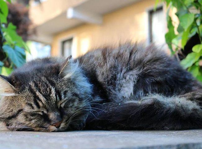 Yaşasın tatil 😁😁 Noalarm Nomail Novoice Sleep Sleep Sleep Alwayssleeping Cats Catsofinstagram Büyükada Islandlife Holiday Ig_today