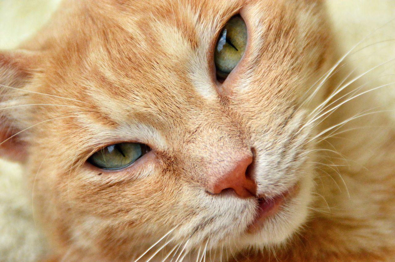 Cat Cute Pets EyeEm Best Shots Animal