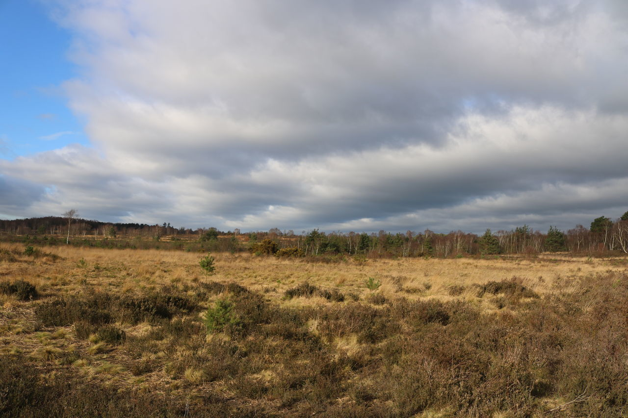 Beauty In Nature Chobham Common Cloud - Sky Common Day Environmental Conservation Grass Heathland  Landscape Nature No People Outdoors Scenics Sky Surrey Countryside Tree Winter