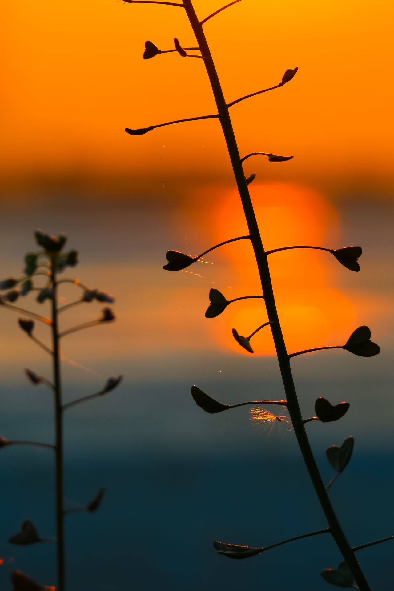 Hearts Beauty In Nature Close-up Colorful Gradient Growth Heart Heart Shape Hearts Leaf Love Love ♥ Macro Photography Nature Orange Color Outdoors Plant Silhouette Silhouette Silhouettes Sundown Sunset Sunset Silhouettes Weed Weeds Are Beautiful Too