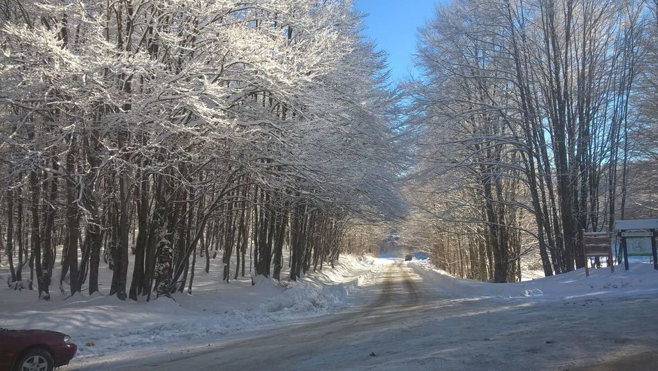 Snow Winter Cold Temperature Tree Road Outdoors Nature