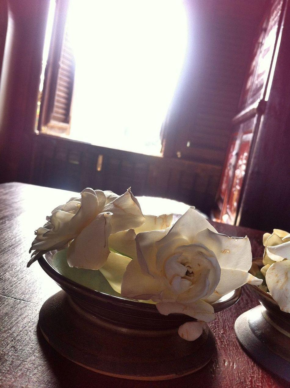 This is how to enjoy your life Enjoying Life Morning Thailand_allshots Flower