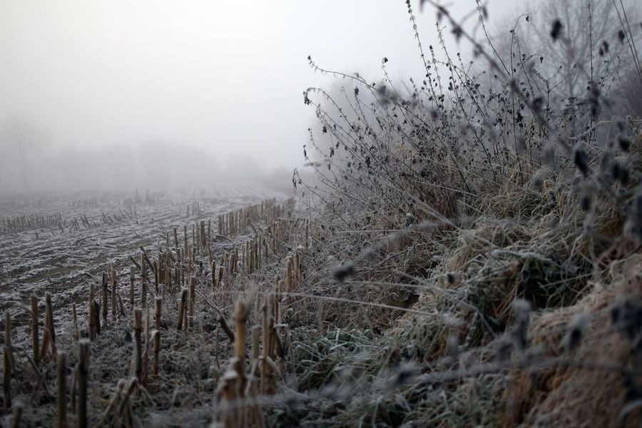 Beauty In Nature Cold Temperature Fog Landscape Misty Morning Nature No People Outdoors Plant Scenics Stubblefield Winter