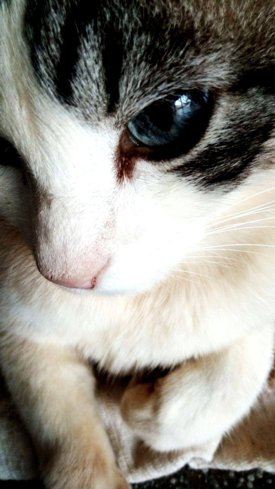 Cat. Cat Cateyes