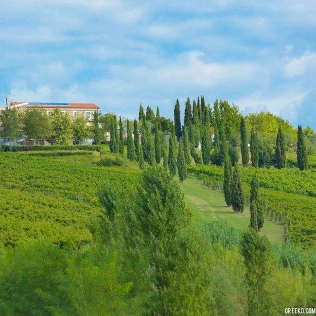 "Organic Farm ""Selvanova"" - a beautiful alternative to Tuscany. {new blog on oreeko.com/blog} Organicfarm Farm Campania Countryside biologico agriturismo fattoria"