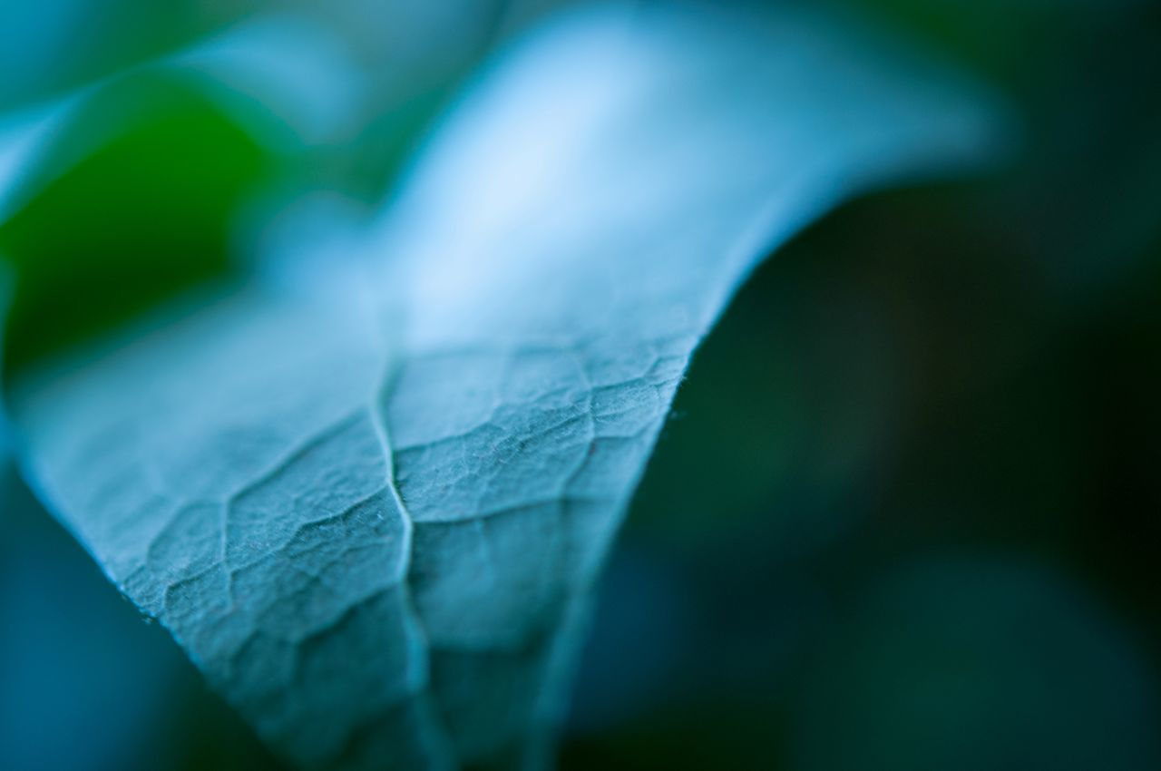 Close-up Leaf Nature No People Day Wintertime Beautiful Beauty In Nature Fragility Tranquil Scene Tranquility Nature Green Green Color January Growth Pic Of The Day Taking Photos Indoors  Macro