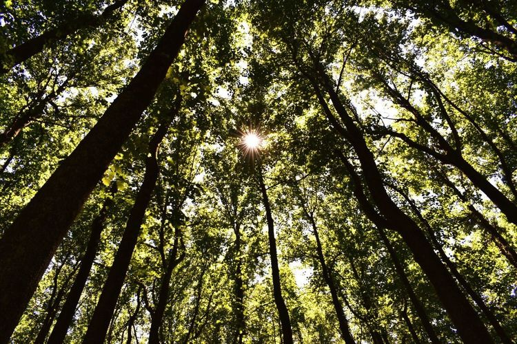Nature's light. Tree Nature Forest Low Angle View Beauty In Nature Sunlight Scenics Growth