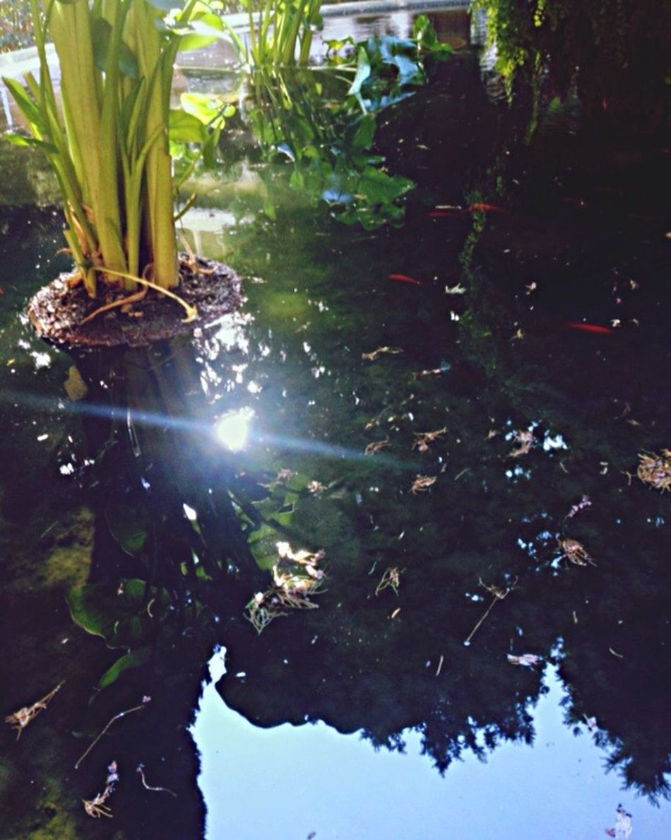 Nature Water Beauty In Nature Reflection Growth Sunlight Beautiful Pond Tranquility Outdoors Tranquil Scene Plant Leaf Scenics