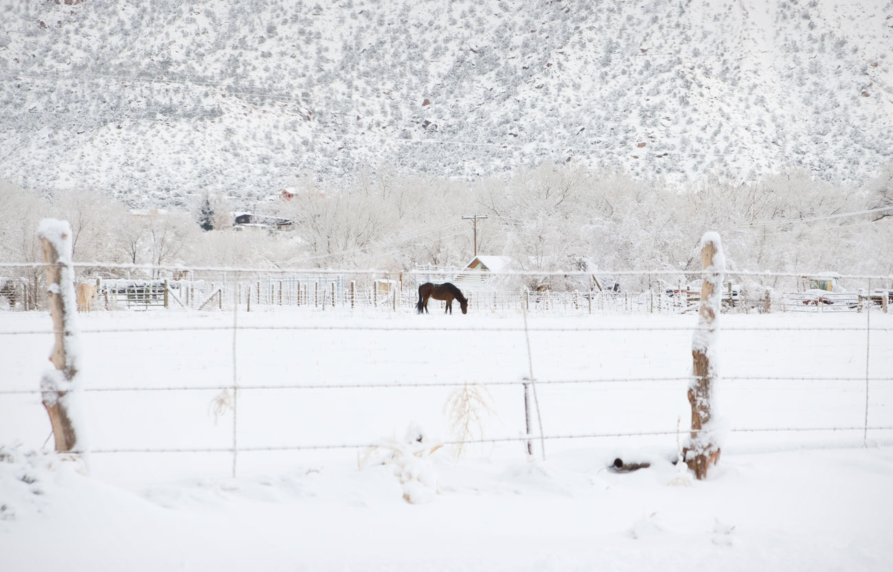 Horse on a winter morning Animal Snow Animal Themes Cold Temperature Winter Domestic Animals Outdoors Nature Farm Life Farm Winter Rural Scene Snowing Snowy Landscape Snowy Morning Cold Days Frozen Landscape Scenics No People Horse Horse In Field