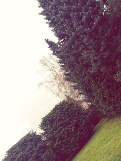 Deepfreeze Jardin Arbre Froid Glacial Gris ???❄️?