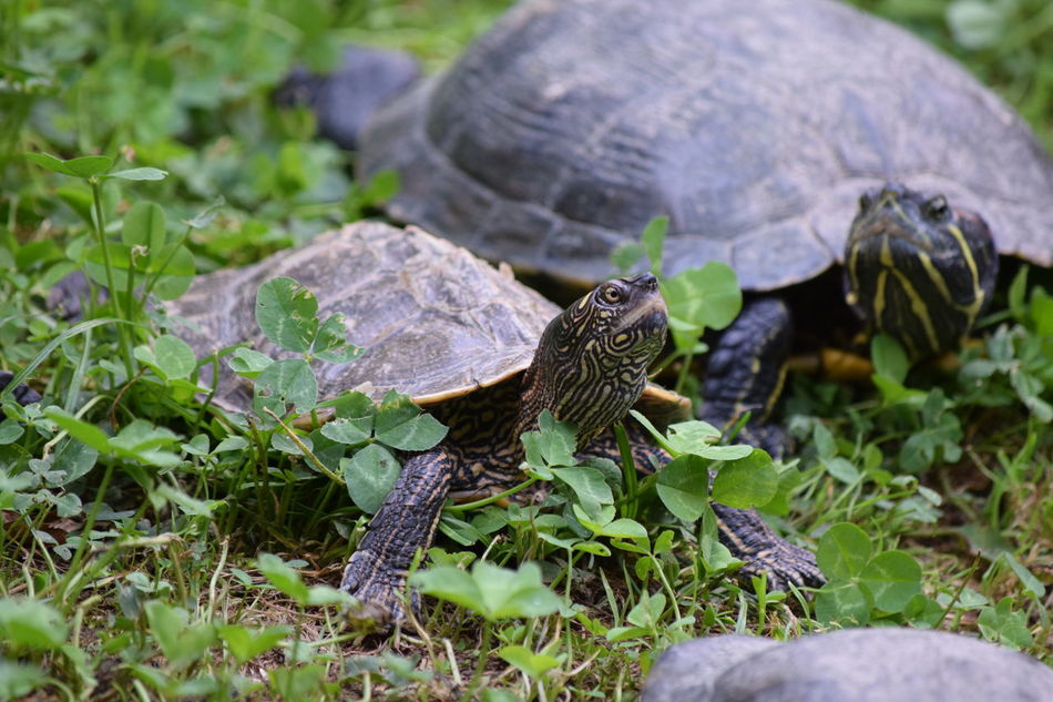 Animal Themes Animals In The Wild Beak Beauty In Nature Bird Day Florida Turtle Flower Focus On Foreground Full Length Green Color Nature No People One Animal Perching Selective Focus Springtime Tortue Marine Tranquility Turtle Vertebrate Wildlife Zoology