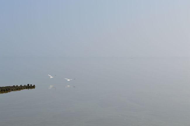 Spiegelglad Water Waddenzee Vogels Waddenzee Waddenzee Vanaf Vlieland