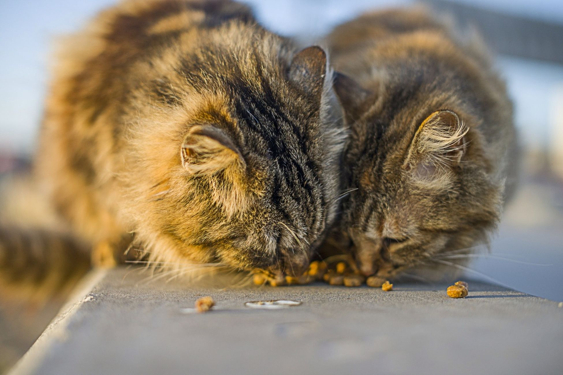 animal themes, one animal, focus on foreground, mammal, domestic cat, close-up, pets, domestic animals, animals in the wild, wildlife, selective focus, whisker, cat, feline, young animal, indoors, two animals, sitting, day, no people