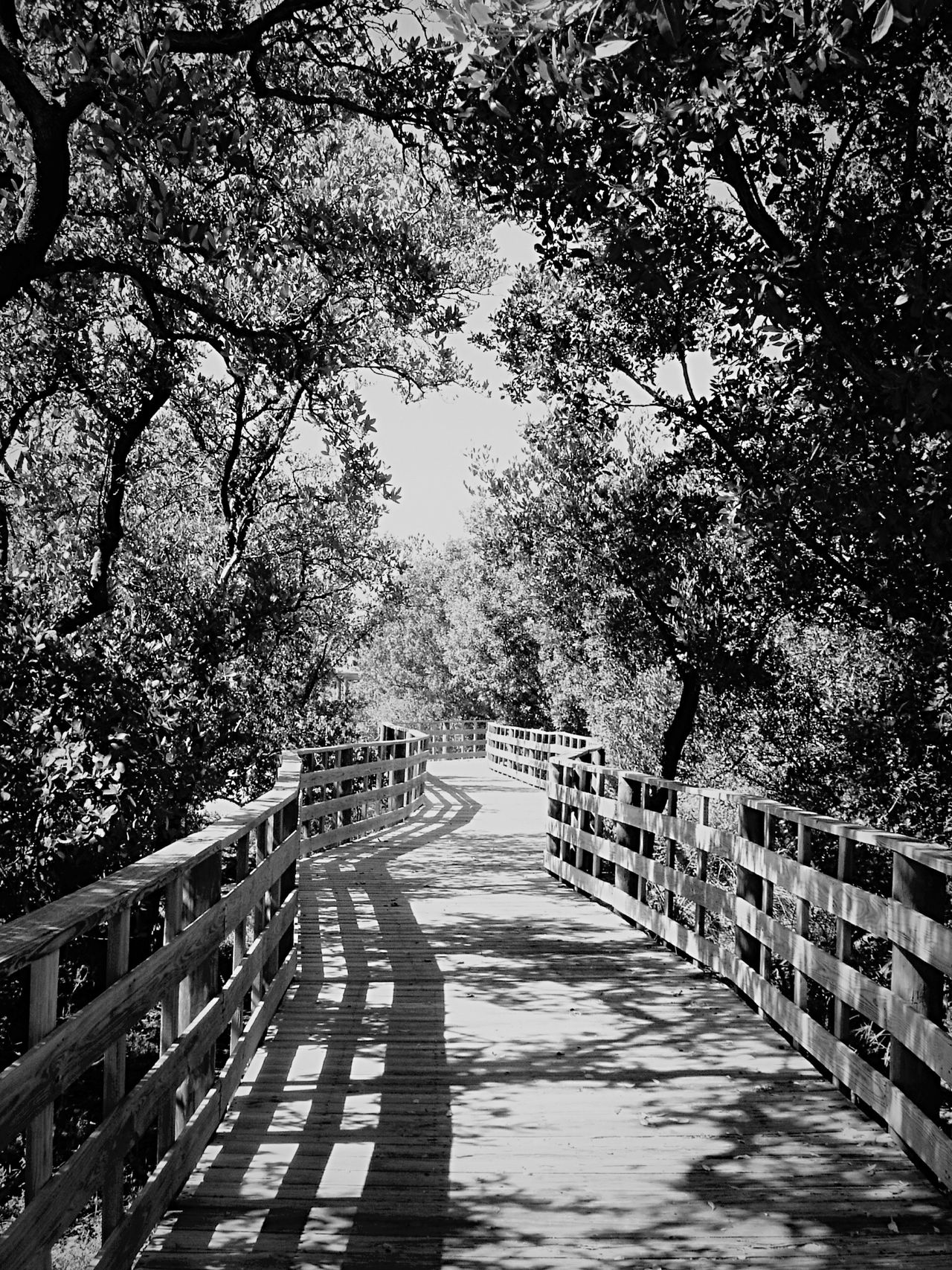 Somewhere in the Florida Keys . Open Edit Blackandwhite Bw_friday_challenge Nature_collection Landscape_Collection Blackandwhite Photography EyeEm Best Shots - Black + White Shades Of Grey B&w Street Photography Landscapes With WhiteWall The Way Forward No People