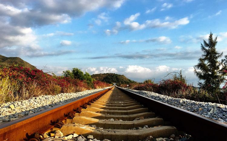 Tree The Way Forward Sky Nature Outdoors Railroad Track Rail Transportation Day No People Beauty In Nature Scenics