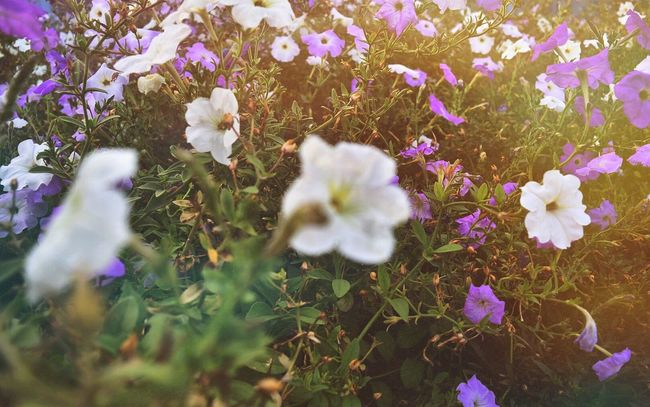 InstaDimka Imagination Flowers