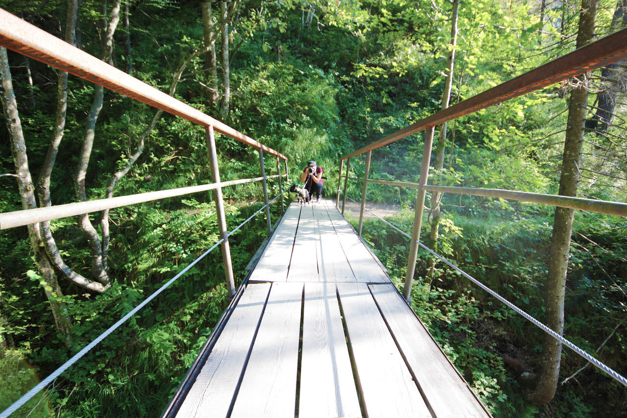 tree, forest, railing, footbridge, the way forward, day, nature, one person, green color, outdoors, real people, adventure, walking, hiking, leisure activity, bridge - man made structure, full length, beauty in nature, growth, people, adult, adults only, only men