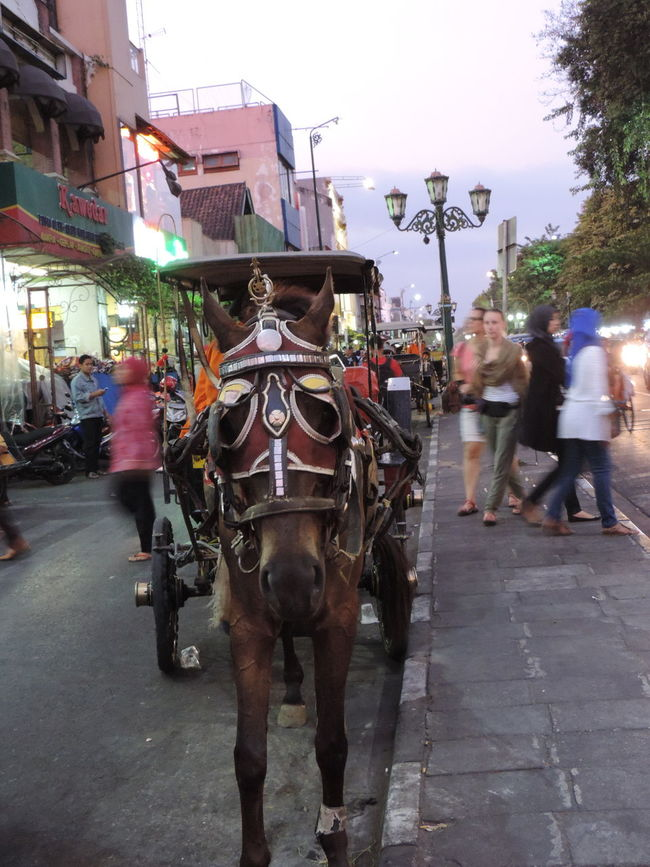 I call u dokar Taking Photos Road TraditionalTransport Jogjakarta INDONESIA Nikon Just Shot Street Photography Cultures