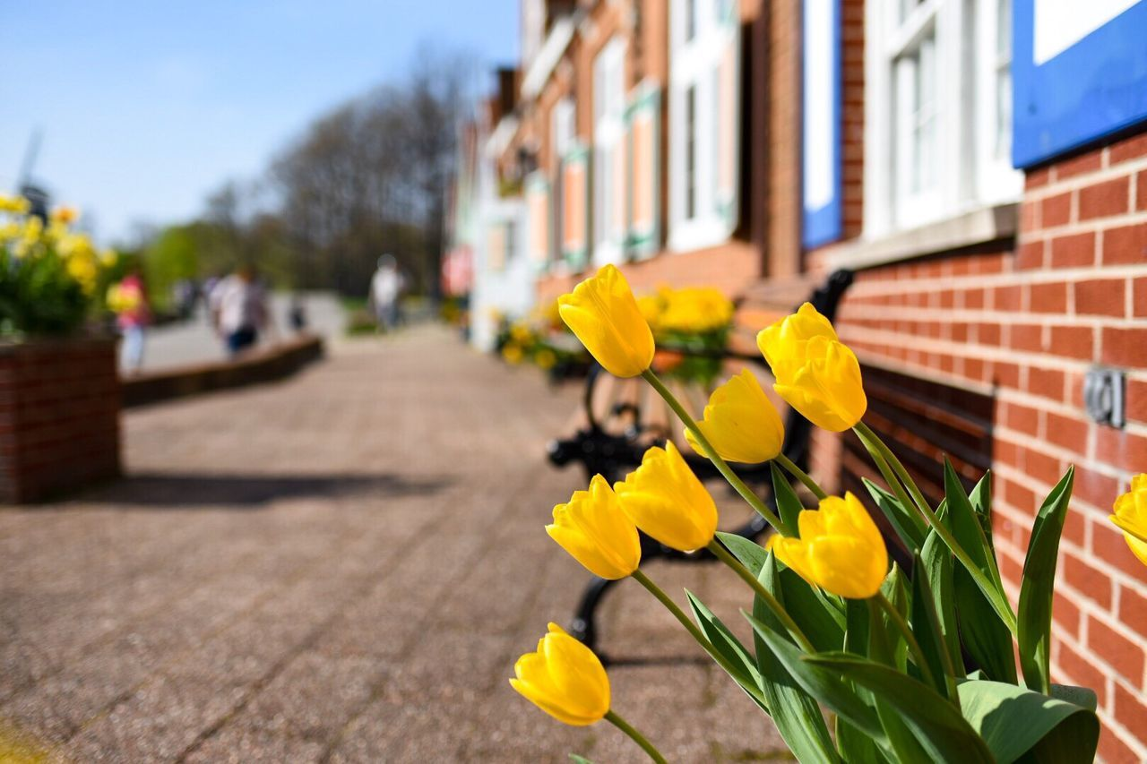 Beautiful stock photos of tulip, Architecture, Beauty In Nature, Blooming, Building Exterior