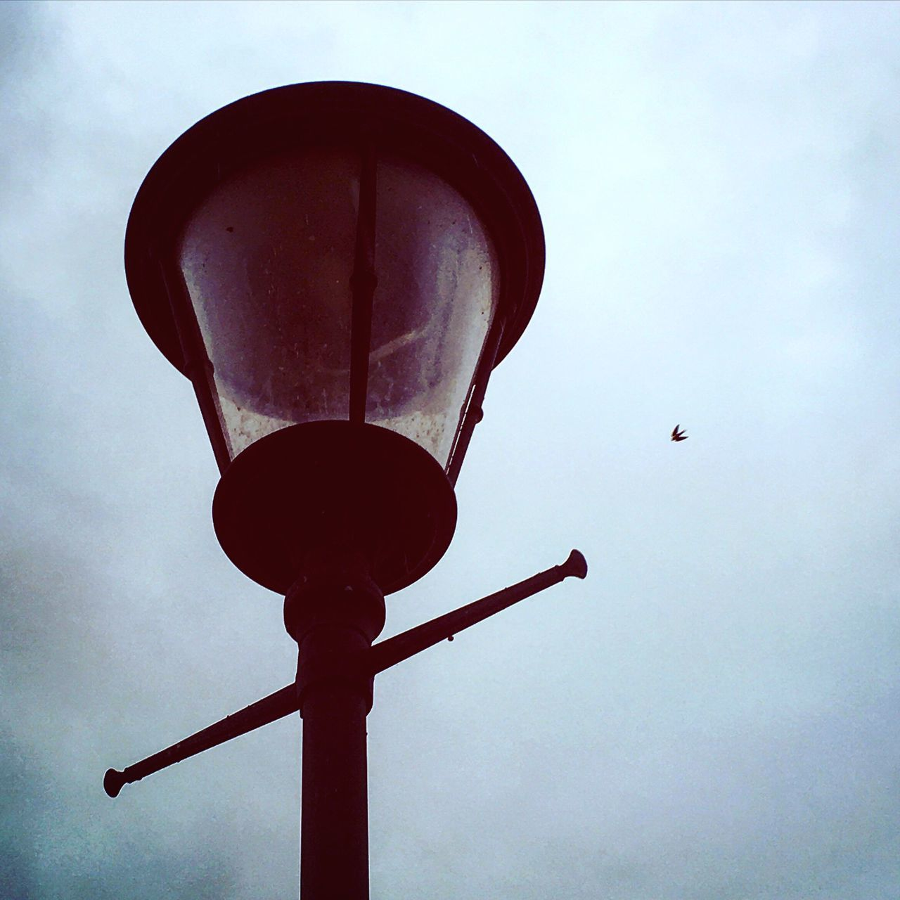 Street lamp and a bird flying in the sky Low Angle View Sky No People Cloud - Sky Outdoors Nature Day Close-up Street Lamp Bird Birds Fly Flying Flying High Flying Bird Poetry Poetry In Pictures Poetrycommunity