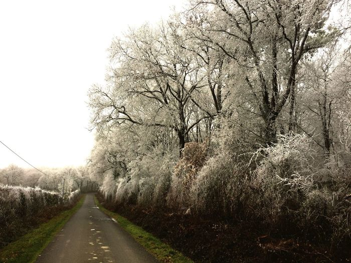 New Years Day. Hoar Frost in the trees.