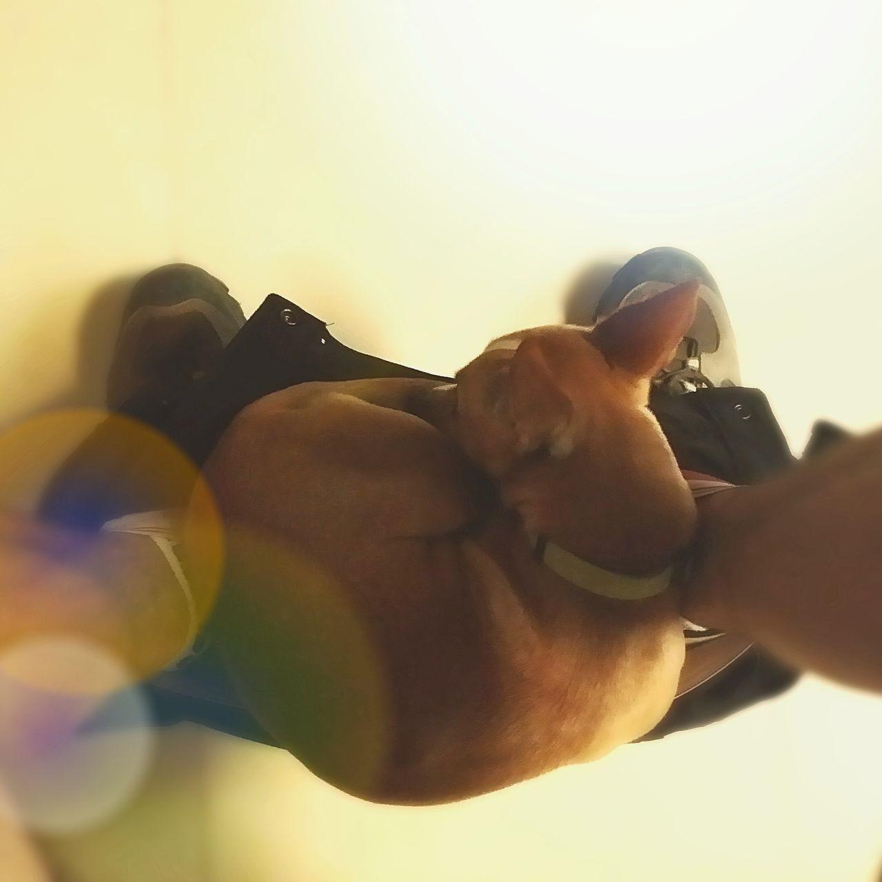 Art Is Portable With Caseable Somos Felices Streamzoofamily Dogs EyeEm Best Shots Mi Pollo Y Yo España