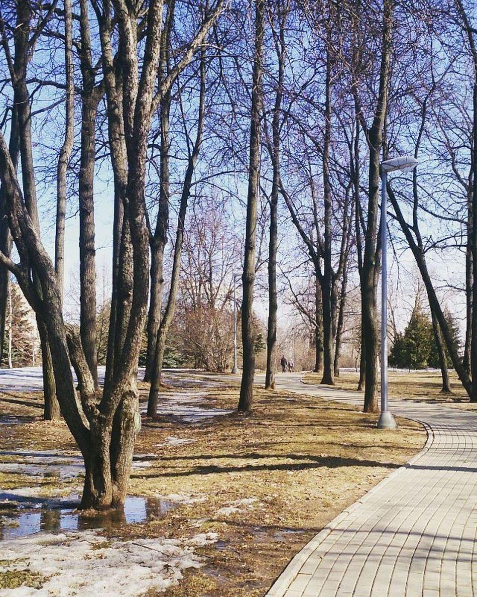Spring Natureperfection Naturephotography Nature Landscape Landscape_lovers Natureawakening Melting March весна2016 март природавгороде